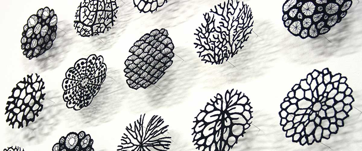 Meredith Woolnough: A Natural Talent