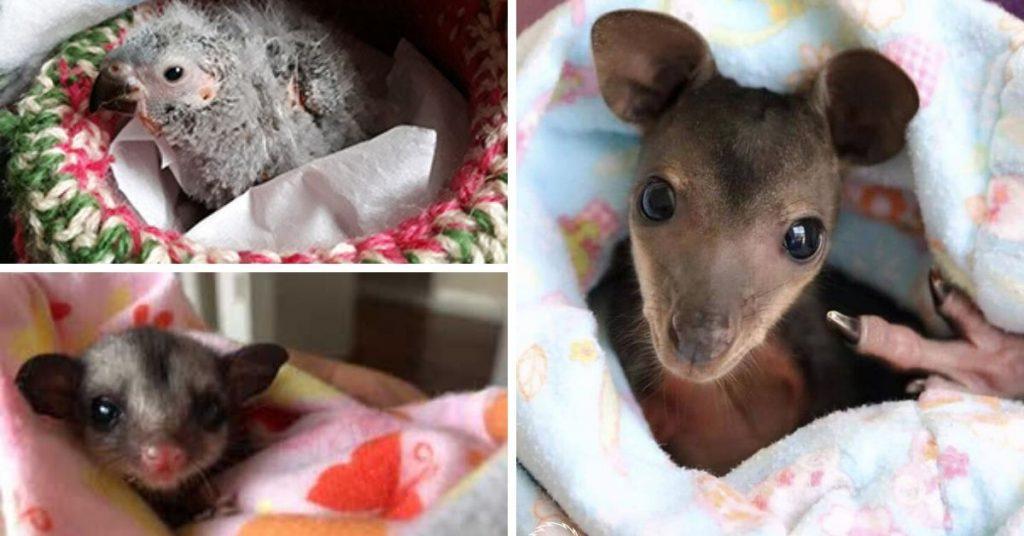 patterns-for-australia's-wildlife