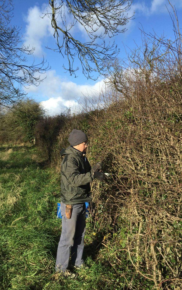 Kazuhito Takadoi harvesting hawthorn twigs