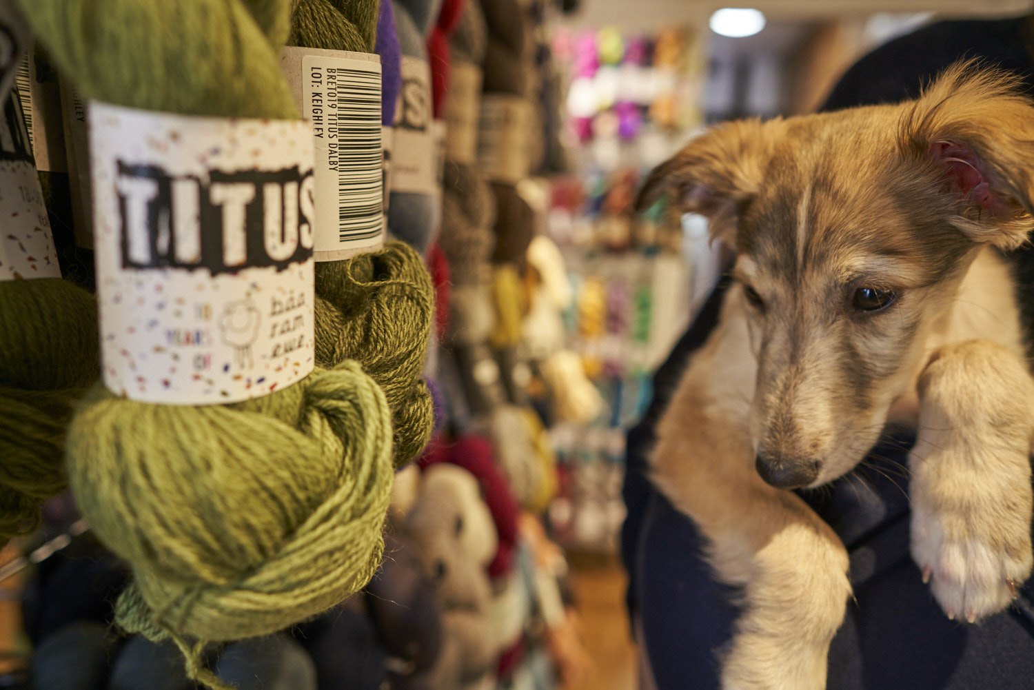 We are a dog-friendly store and well behaved pooches are always welcome!